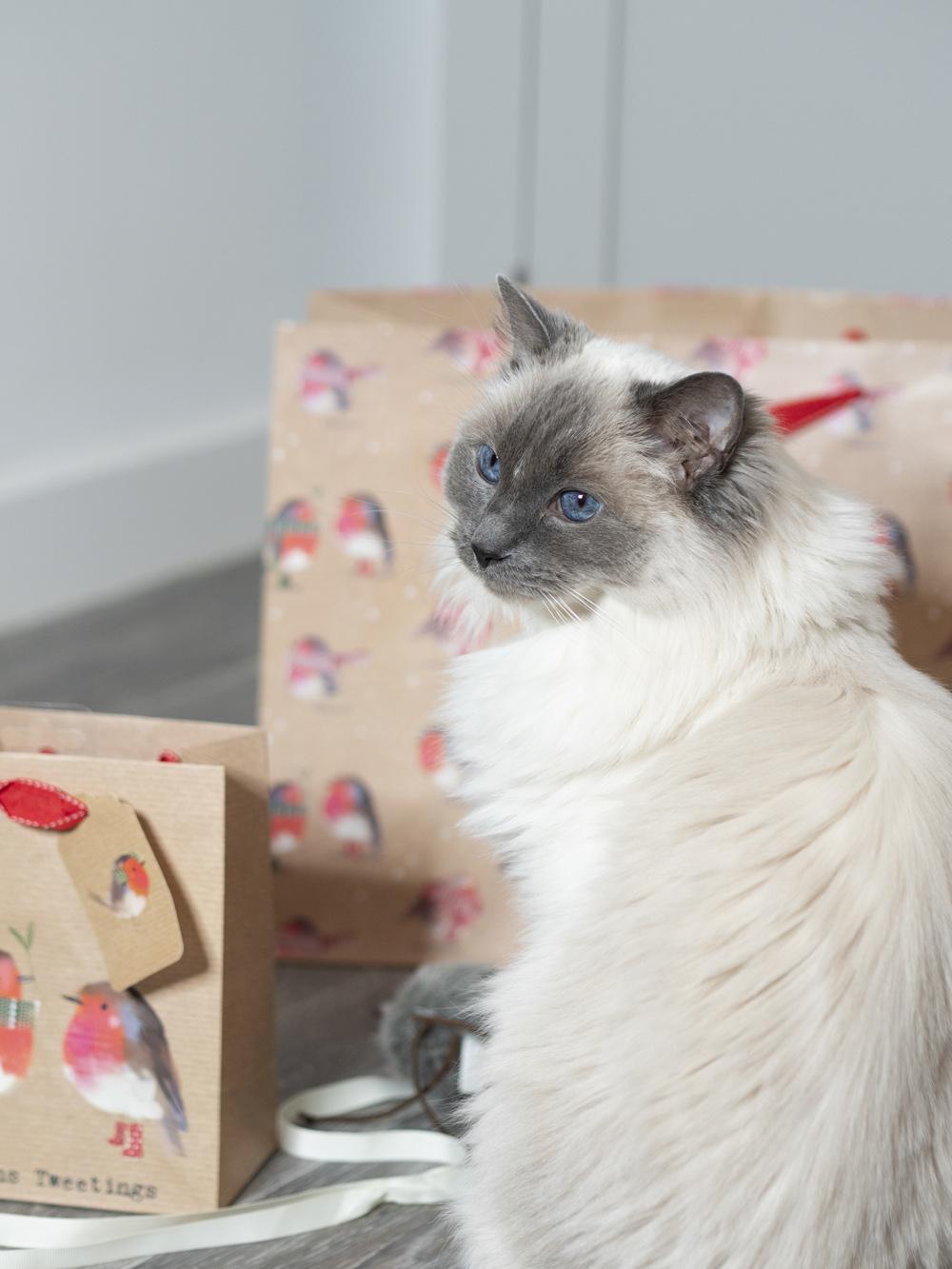 Christmas with my cat Sookie Petplan Insurance